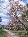 Spring in Princeton 02.JPG