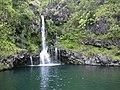 Starr-030729-0093-Hedychium coronarium-habitat and waterfall-Hanawi stream-Maui (24611732946).jpg