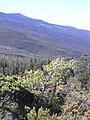 Starr 040214-0092 Sophora chrysophylla.jpg