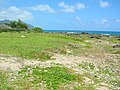 Starr 050418-0256 Jacquemontia ovalifolia subsp. sandwicensis.jpg