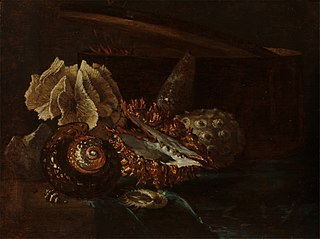Still Life with Shells and Coral