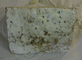 Stilton Cheese Rind.png
