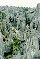 Stone forest 1983-4.jpg