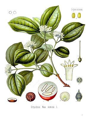 Alkaloid - Strychnine tree. Its seeds are rich in strychnine and brucine.