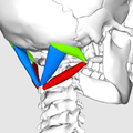 Suboccipital triangle07.png