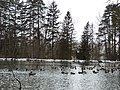 Sulphur Springs Walk (40249928063).jpg