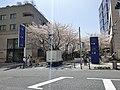 Sunny day in Roppongi Hills.jpg