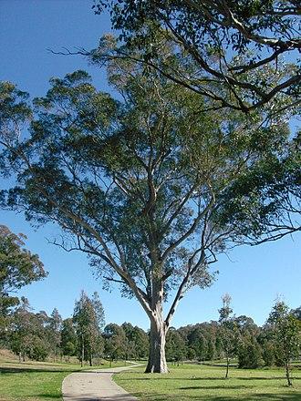Western Sydney Parklands - Walking path in bushland
