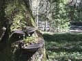 Symbiosis Kungsfors nature reserve.jpg