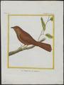 Tachyphonus melaleucus - 1700-1880 - Print - Iconographia Zoologica - Special Collections University of Amsterdam - UBA01 IZ15900265.tif