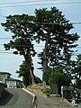 Tagajo Sue-no-Matsuyama 01.JPG