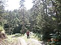 Tahtacık Yaylası kamil yıldırım - panoramio.jpg