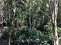 Tangkiling Nature 14.jpg