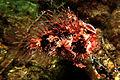 Tassled Angler Fish.jpg