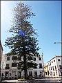 Tavira (Portugal) (33344495046).jpg
