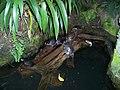Teplice, skleník Tropicana, tropický skleník, želvy nádherné.jpg