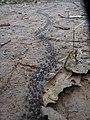 Termites in Pang Mapha District.jpg