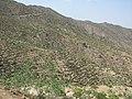 Terrassierte Berge Eritrea.JPG