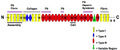The Modular Structure of Fibronectin and its Binding Domains.png