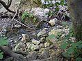 The Nahal Amud stream - panoramio.jpg