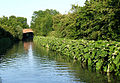 The Oxford Canal near Ansty, Warwickshire - geograph.org.uk - 1054222.jpg