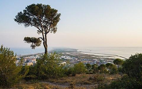 The Pine and the Sandsplit, Sète, France.