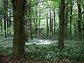 The Spotlight Effect, Forest Fawr - geograph.org.uk - 424447.jpg