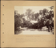 The Virgin's Tree Near Heliopolis by Boston Public Library.jpg