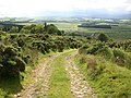The descent to Old Bewick - geograph.org.uk - 477474.jpg