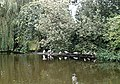 The duck pond, Southchurch Hall - geograph.org.uk - 334216.jpg