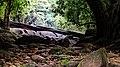 Thommankuth Falls 2.jpg