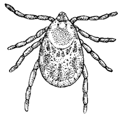 Tick (PSF).png