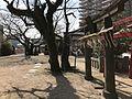 Torii of Inari Shrine in Hiyoshi Shrine near Kurume Station.jpg