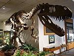Torvosaurus BYU 1.jpg
