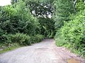 Track Through The Trees, Old Dinmore Hill - geograph.org.uk - 1365584.jpg