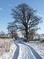 Track to Greenwell Farm - geograph.org.uk - 520520.jpg
