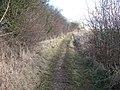 Track towards Sarsgrove - geograph.org.uk - 1740041.jpg