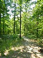 Trail to Driskill Mountain - panoramio.jpg