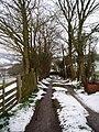 Tree-lined avenue - geograph.org.uk - 136383.jpg