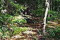 Treppe im Wald.jpg