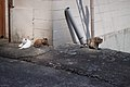 Two cats and One cat (4498945763).jpg