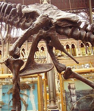 Saurischia - Image: Tyrannosaurus pelvis left