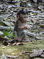 Ubud Monkey Forest 03.jpg