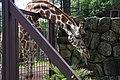 Ueno zoo, Tokyo, Japan (6155004068).jpg