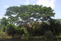 Un árbol.PNG