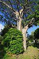 Un lieu de culte pour les Mahorais (Dzaoudzi, Mayotte) (34824387085).jpg