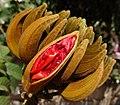 Unfolding petals (10773525333).jpg