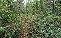 Upplandsleden, Sweden 08.jpg