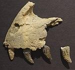Utahraptor premaxilla BYU.jpg