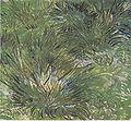 Van Gogh - Grasbüschel.jpeg